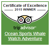 Trip Adviser - 2015 Award for Excellence - Whale Watching Tours