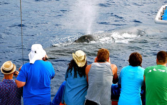 Kohala-Kona Coast Best Hawaiian Whale Watching Cruises