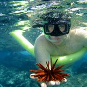 Snorkeling marine life lessons and fun for kids