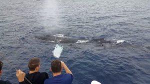 Humpbacks Pay us a Visit