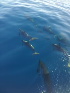 Dolphins Ride Bow Wake