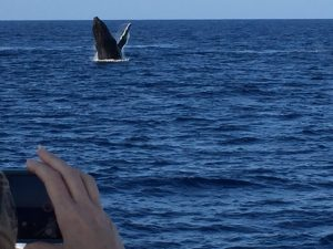 Watching Whales Photo Courtesy of Bob and Gail Sims