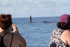 Watching Whales Photo courtesy of Brian Reinsisch