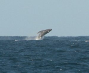 Breach! Courtesy of Rodger Berge
