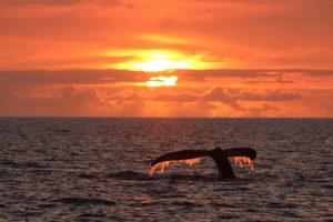Sounding at Sunset - Image courtesy of Kyle McKinzey