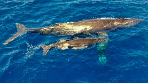 Mom and Calf - Image Courtesy of Paul Norris