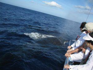 Humpbacks Checking Us Out