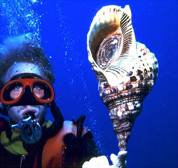 Best Scuba Trips in Hawaii - Hawaii Ocean Sports