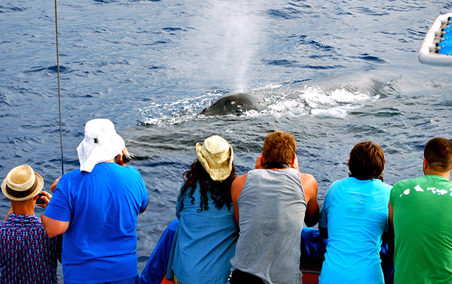 Kohala-Kona Coast Best Hawaiian Whale Watching Cruises