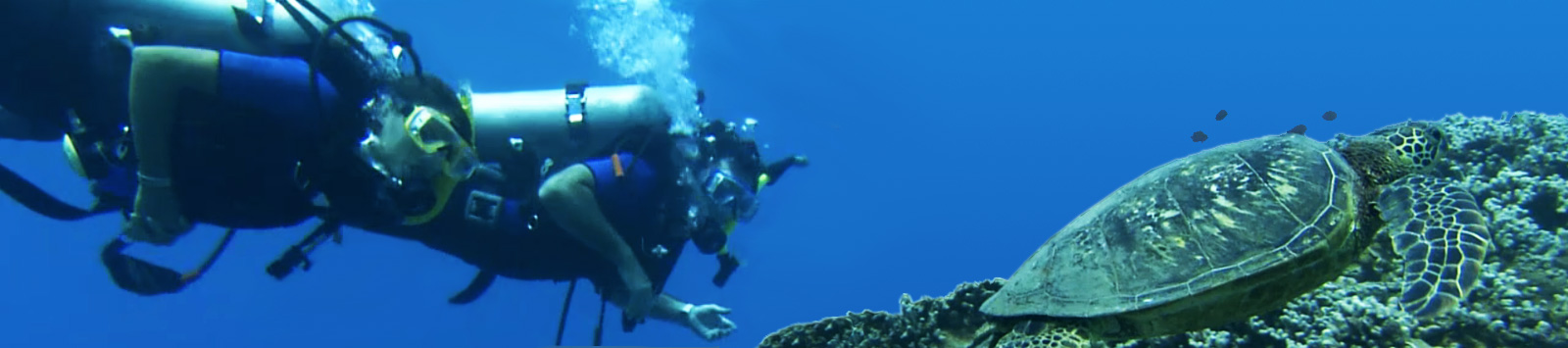 scuba-cruise-featured-bg