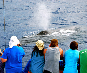 Whale Watching Cruises - Ocean Sports Hawaii