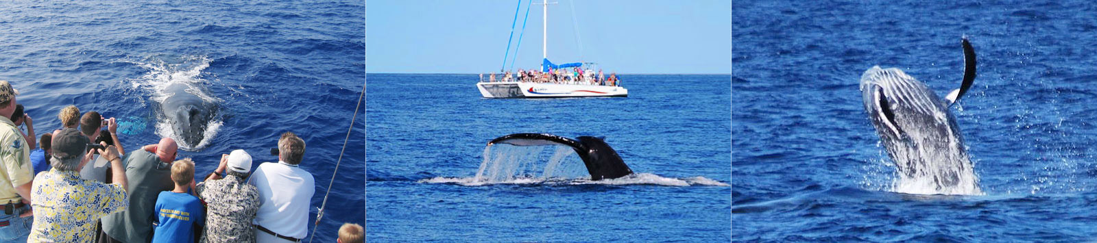 Humpback Whale Sightings and Statistics