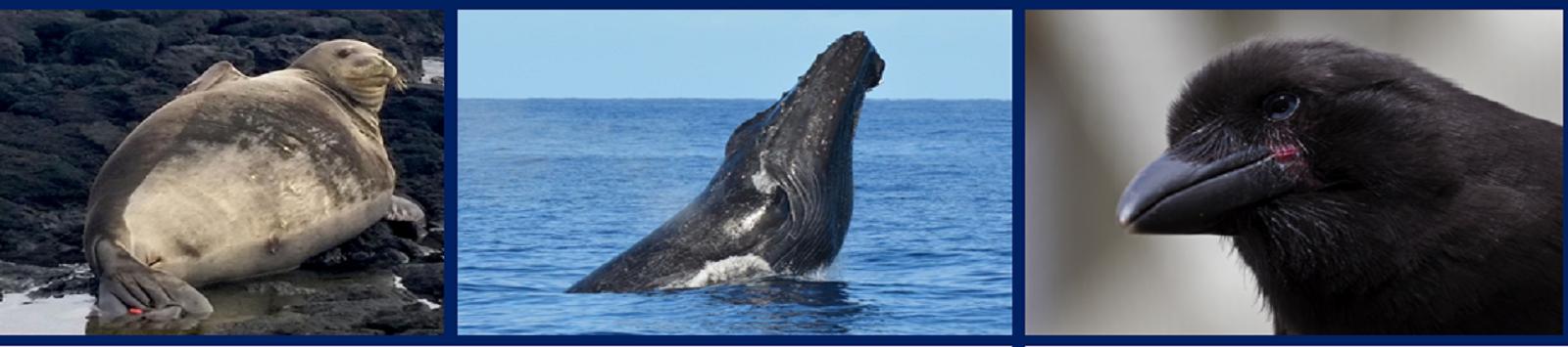 Endangered Species Hawaii