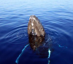whalewatchoceansports