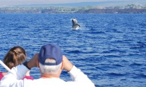 Humpback approaches