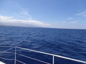 Looking for Humpbacks