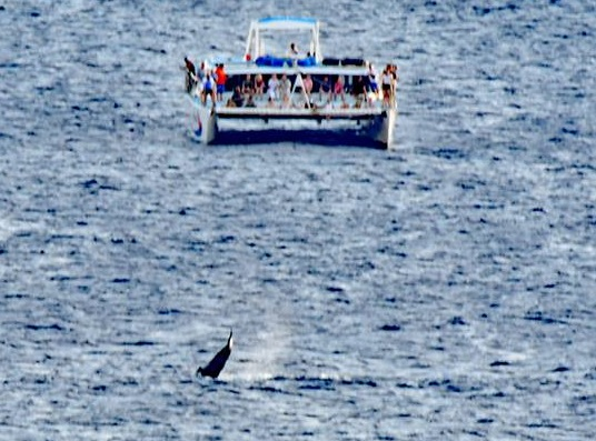 Guests on Alala Watch Tail-Lobbing Humpback - Image courtesy of John Landers