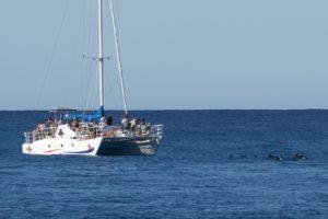 Spinner Dolphins visit Manu Iwa - Image courtesy of Rodger Berge