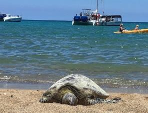 Beach at Abay - Ocean Sports Hawaii